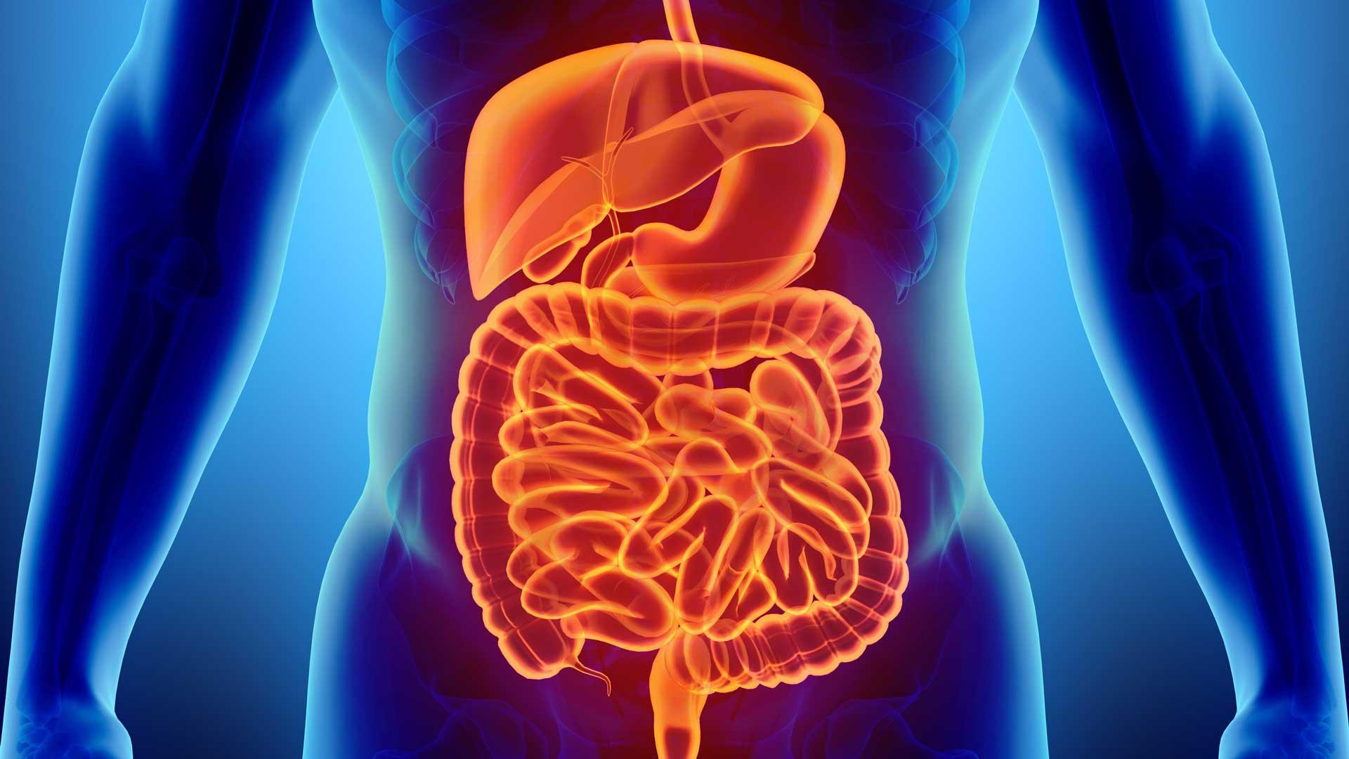 Apparato digerente e metabolico: questi sconosciuti
